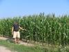 Kukuřice u Nové Vsi  6.8.2004